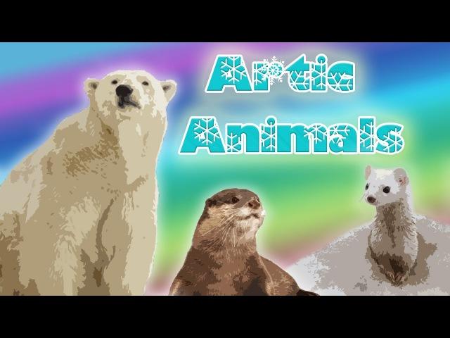 10 Arctic Animals for Kids – Snow Animals for Kids – Polar Animals
