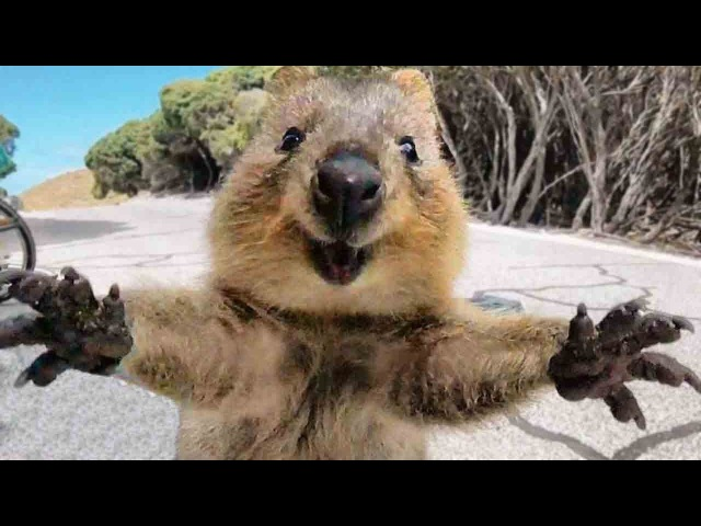 Animals Hugging Humans - Animal Hugs People Videos - Animal Hugs Human Compilation