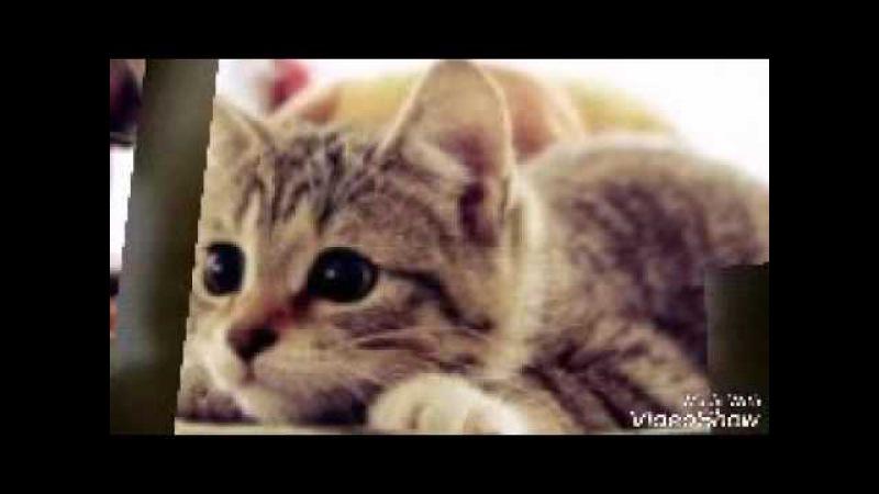 Киса киса мяу мяу киса киса мур мур Я тебя люблю и ко всем котам ревную