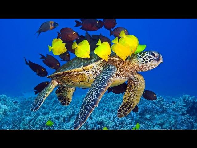 El mejor Documental - Мир океана. Подводный мир . Документальный фильм