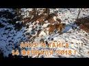 АМУР И ТАЙГА 14 ФЕВРАЛЯ 2018 Г.