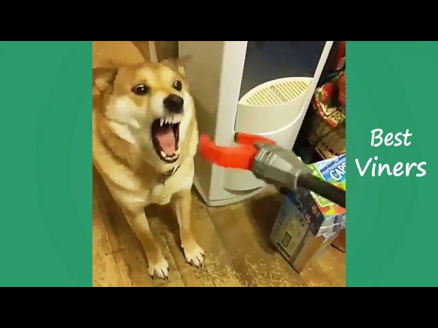 Try Not To Laugh or Grin While Watching Funny Animals Vines - Best Viners 2017