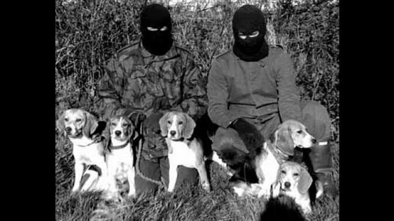 Animal Liberation Front Compilation ( ALF ) - GO VEGAN