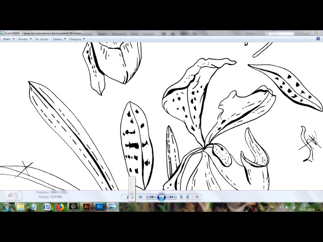 Часть 1 подробно - векторное изображение из рисунка линером на бумаге.