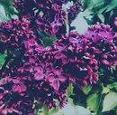 Валерия Завьялова фото #38