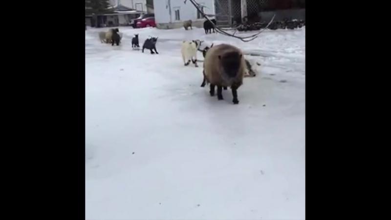 Когда едешь по зимней дороге на летней резине