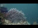 Avara luonto: Kaupunki meren alla