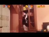 Когда кот немножко долбо*б