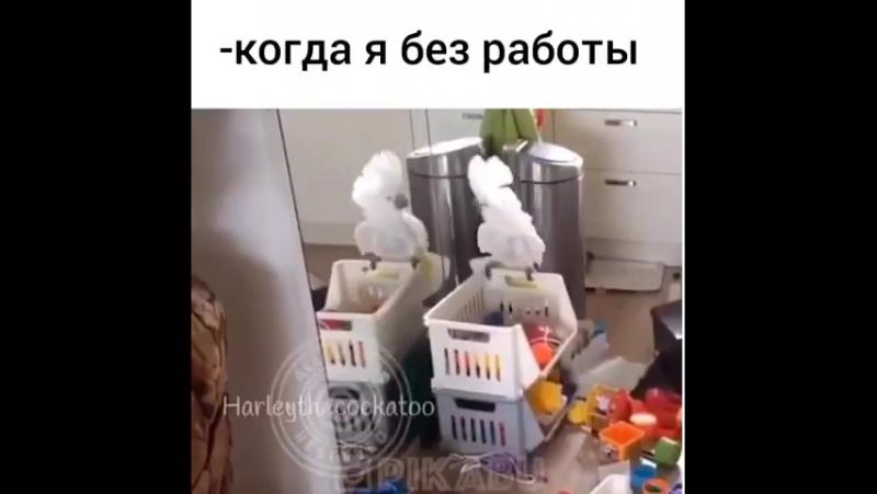 Когда,я без работы)