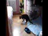 мой кот наркоман......))))