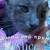 """Группа """"Кошки из Alice"""""""