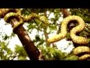 Один из самых страшных островов в мире - Змеиный остров