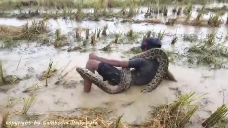 Камбо. Блокбастер с рисовых полей 2. Cambo, children and snakes. Blockbuster fro