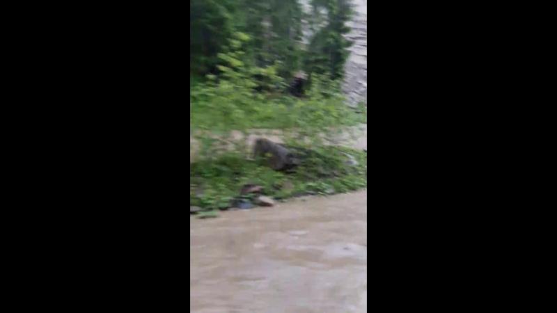 Река Чорный Черемош вышла из берегов после дождя.
