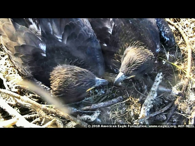 AEF-NEFL Eagles ~ Family Pictures ~ 02·18·18