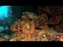 Red Sea UNDERWATER, Part2. Красное море, подводный мир.Часть 2