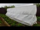 Огурцы - выращивание на шпалере, формировка. 2017 год