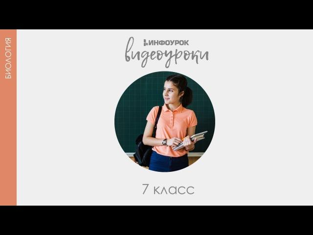 Тип Круглые черви | Биология 7 класс 14 | Инфоурок