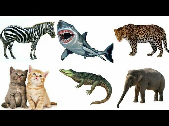 Животные и насекомые. Название для малышей. Мультик о животных детям