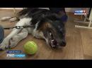 В коррекционном центре Архангельска представили собак-терапевтов