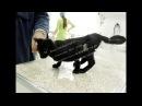 Кот Карл на приеме в клинике