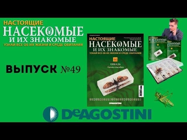 Насекомые и их знакомые №49 - Цикада   2 ЖУРНАЛА В ОДНОМ   Распаковка