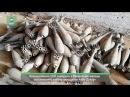 Сирия: ФАН публикует видео с освобожденной «Силами Тигра» авиабазы «Абу-Духур»