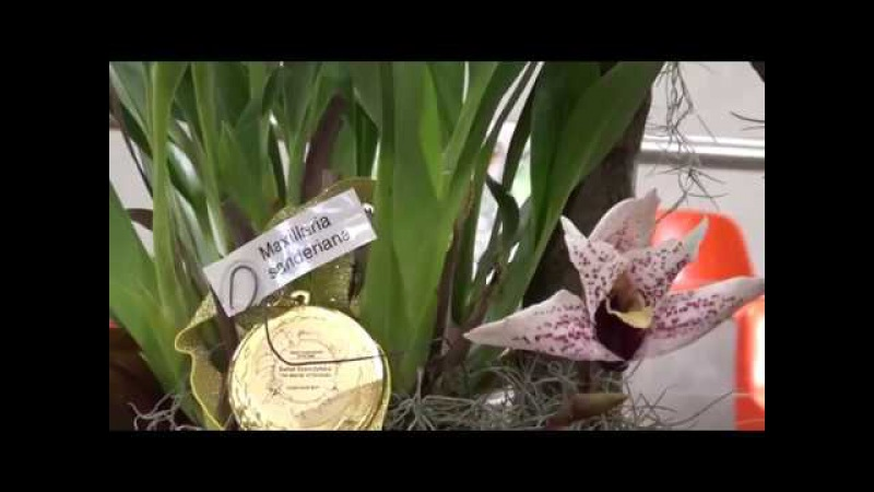 The World of Orchids international orchid show in Poland, May 12-14, 2017