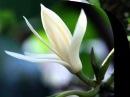Dahil Sa Isang Bulaklak (Because Of A Flower) by Leopoldo Silos