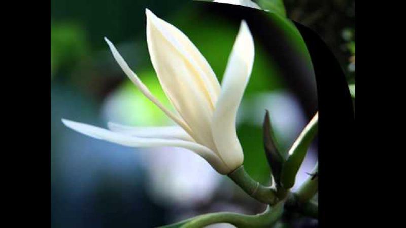 Dahil Sa Isang Bulaklak Because Of A Flower by Leopoldo Silos