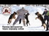 Коллективная дрессировка собак по защите