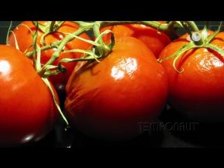 Tomato Timelapse - Zeitraffer Tomaten
