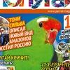 "Журнал ""Попугаи"""