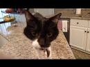 Кот Джек с самым низким в мире «Мяу» (VHS Video)