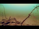 АТАКА ГОРБАЧА ОКУНЯ НА КАРАСЯ!!! ЩУКА В ШОКЕ!!! Рыбалка и Подводная съемка