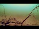 АТАКА ГОРБАЧА ОКУНЯ НА КАРАСЯ ЩУКА В ШОКЕ Рыбалка и Подводная съемка