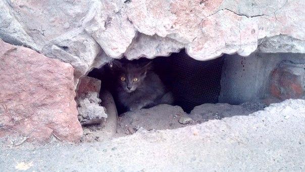 !!! Важно!)Неравнодушные люди,прошу помощи! Мною были обнаружены 3 кот