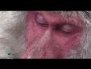 Парк Джигокудани Япония_ Снежные обезьяны купаются в термальном источнике