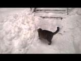 Тузик охотится на снег ;-)