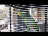 Говорящий попугай Коко.  Учим греческий с Коко