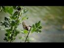 СВАДЕБНОЕ ВИДЕО Свадебная видеосъемка Свадебный клип СВАДЕБНЫЙ ОПЕРАТОР