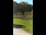 Сад яблоневый в Ясной Поляне и аллея
