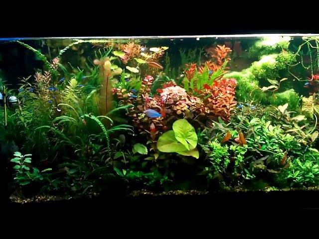 аквариум 500л после прополки.