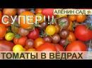 ОТЛИЧНАЯ ИДЕЯ Помидоры в вёдрах / Выращивание томатов в вёдрах, мешках, ящиках