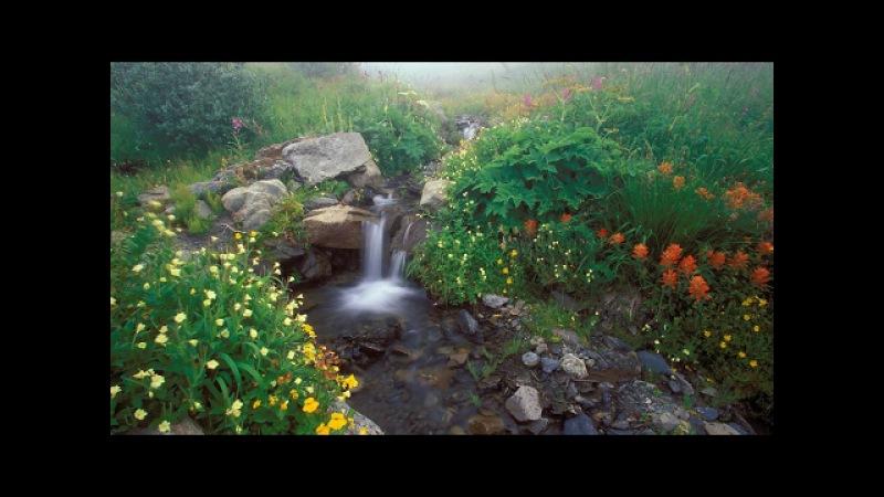 5 часов! Пение птиц Звуки природы Журчание ручья для отдыха расслабления и релаксации Nature Sounds