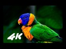 4K VIDEO ultrahd hdr sony 4K VIDEOS demo test nature relaxation movie for 4k oled tv - YouTube