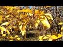 Sierra de Mijas, olea europaea, punica granatum, populus alba, ALHAURIN de la TORRE, 12/2017