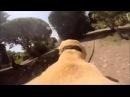 Собака с камерой бежит купаться Приколы с животными