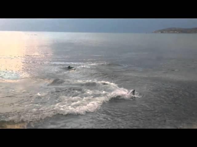Дельфины, Феодосия, Крым