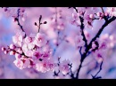 Healing Chinese ZEN music of Anxiety Stress | To pacify the body Mind | Relax Music